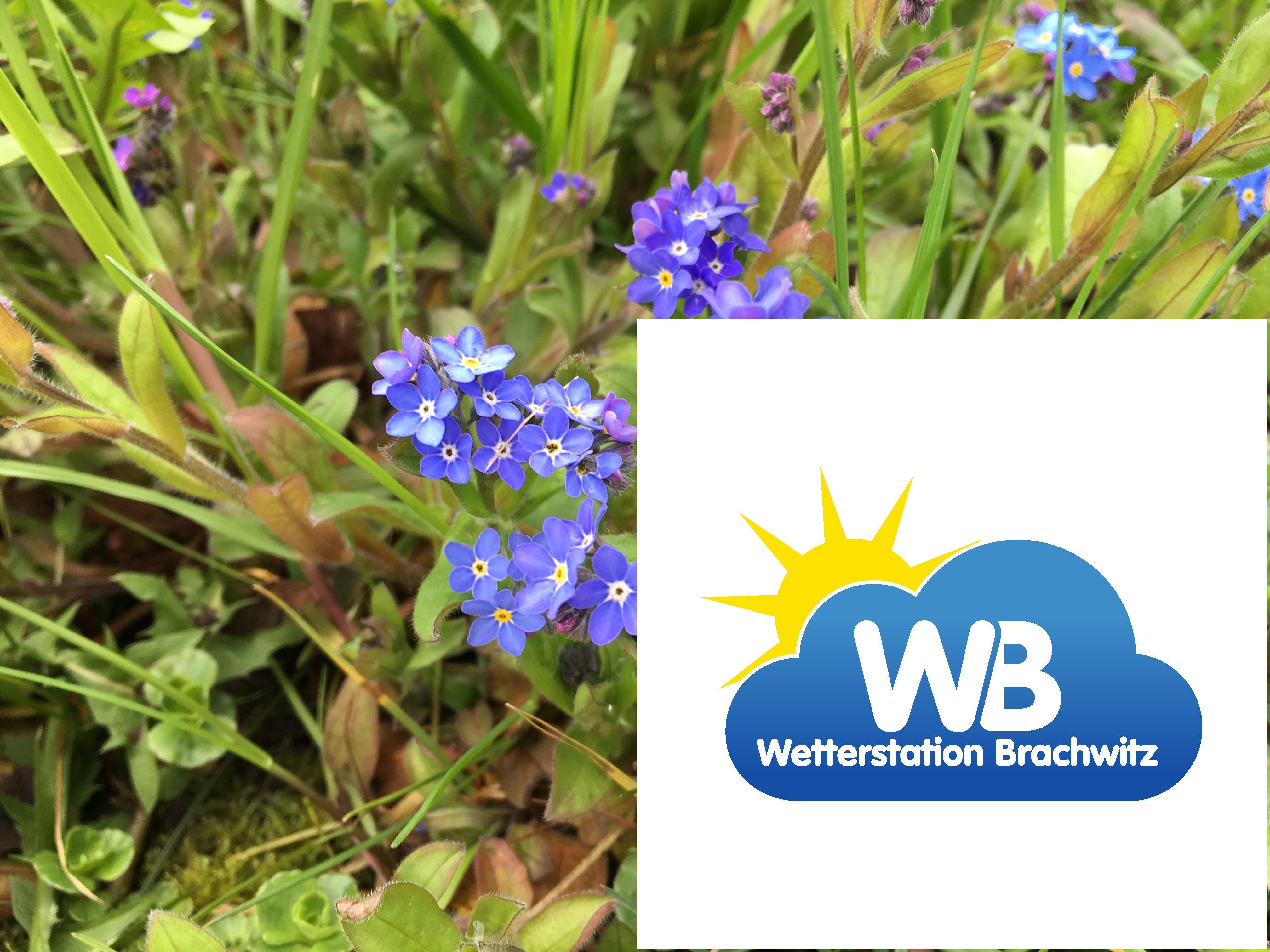 Frühling Frühlingsbilder der Wetterstation Brachwitz