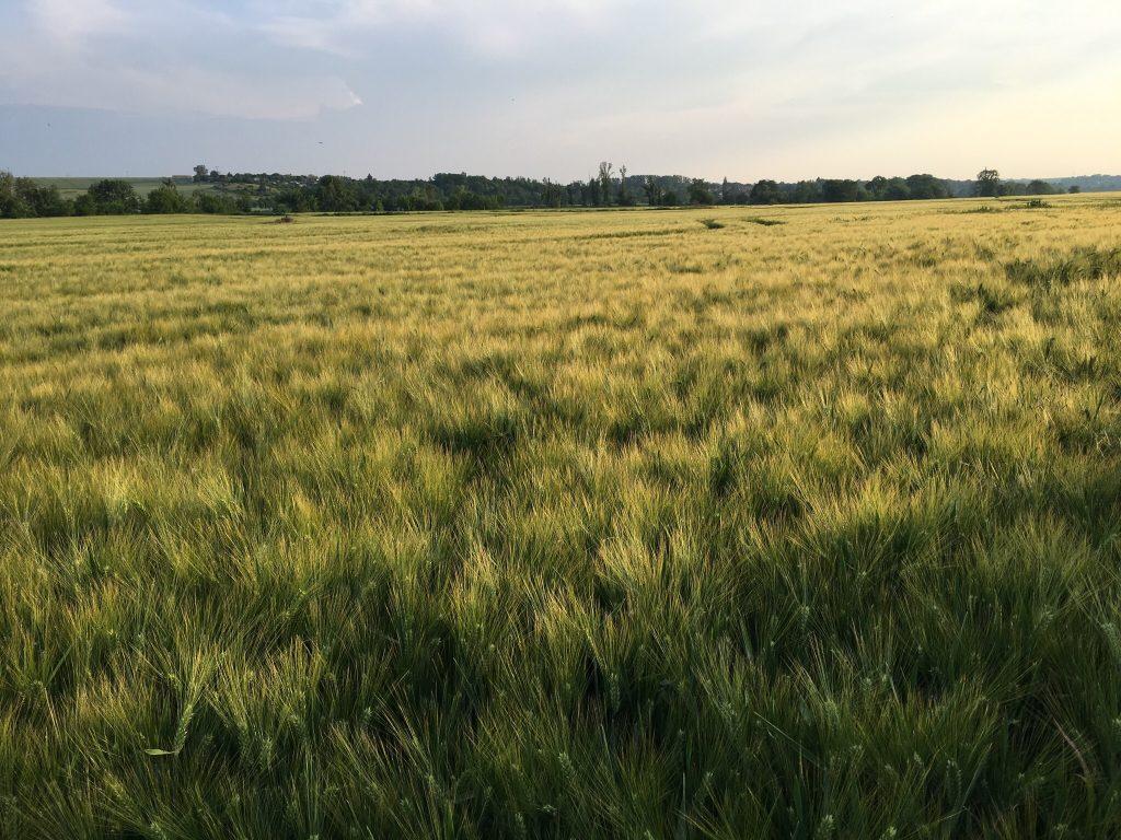 Sommer Bilder Wetterstation Brachwitz