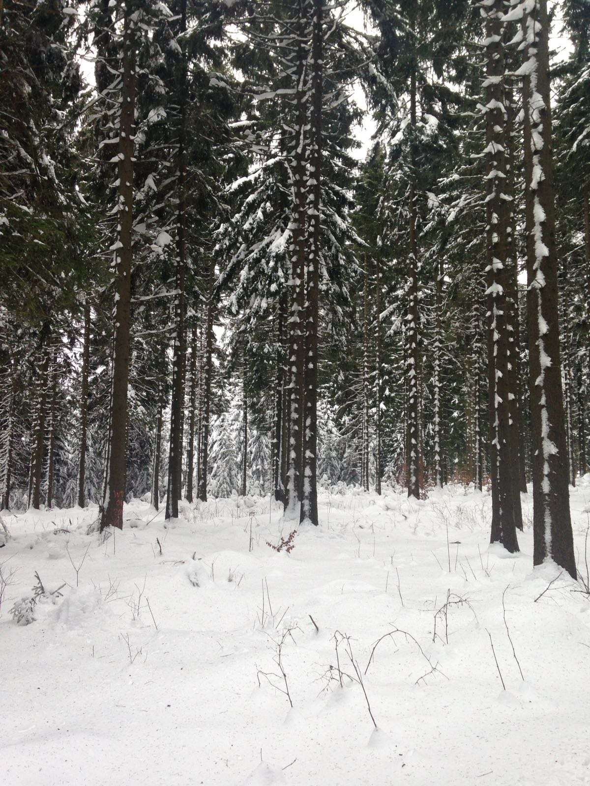Winter Bilder Wetterstation Brachwitz